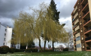 Elagage, GREEN HAND CO, entretien des espaces verts, taille raisonnée, taille douce, éclaircie